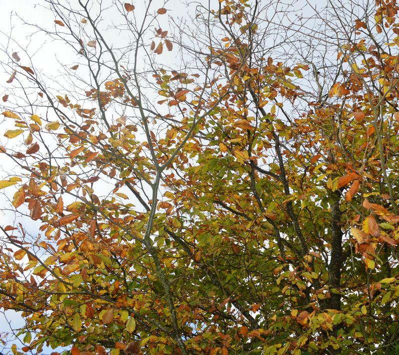 October tree edit