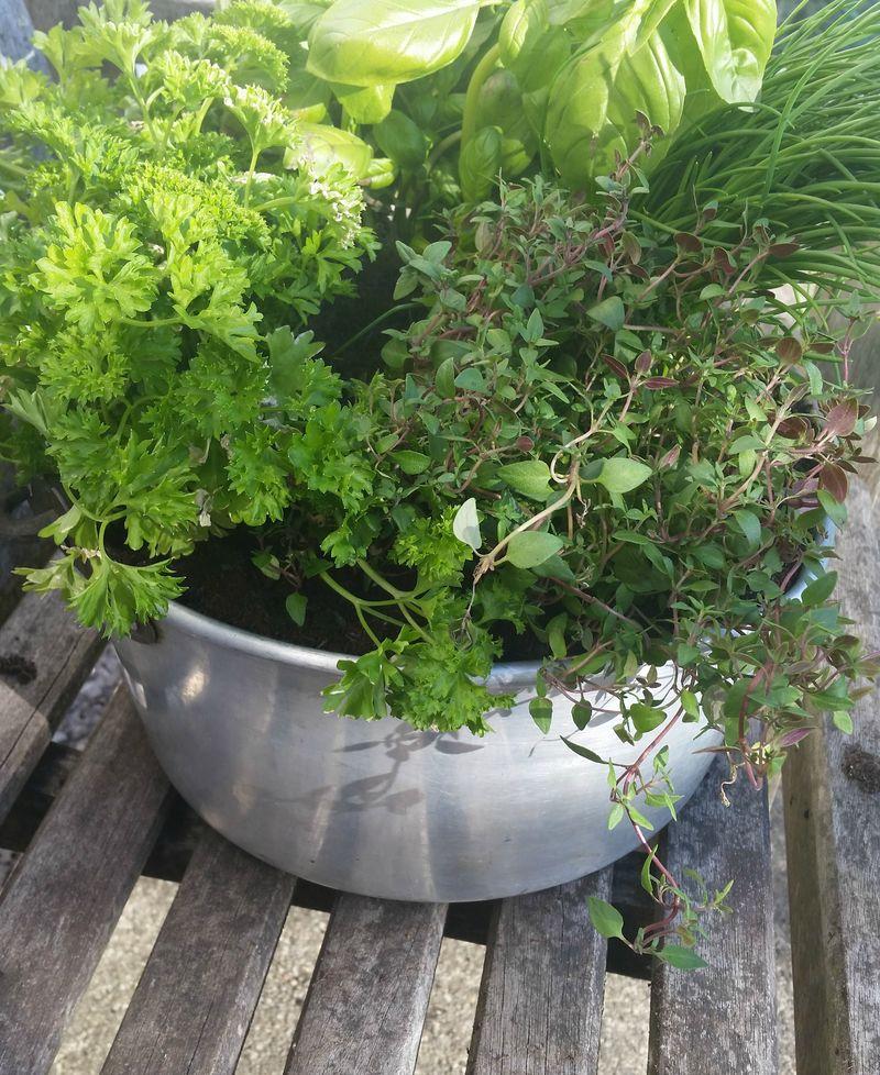 Herb garden cropped