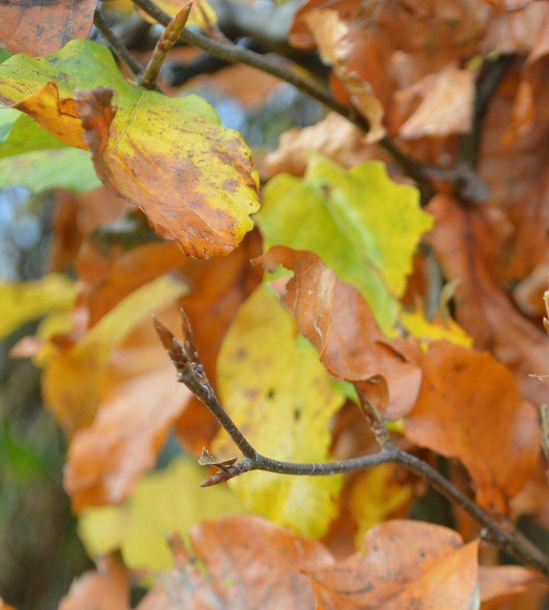 October leaf edit