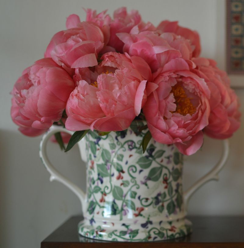 Peonies cropped
