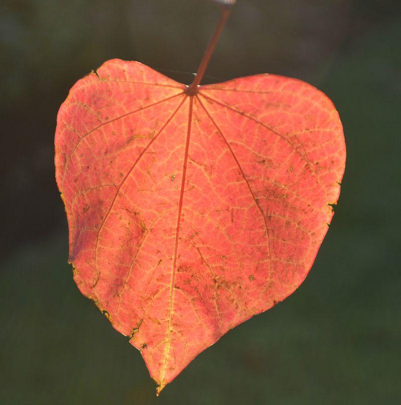 October single leaf edit