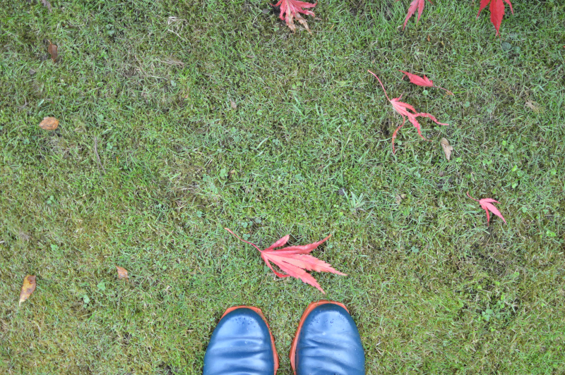 Acer leaves and blue shoes